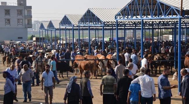 Bayram öncesi Hayvan pazarları hareketlendi
