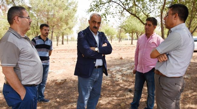 Karacurun Ormanı yeniden ağaçlandırılıyor