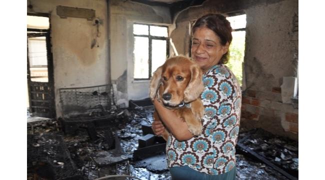 'Paşa' köpek 4 kişilik aileyi ölümden kurtardı