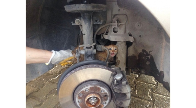 Araç içine sıkışan kediyi itfaiye kurtardı