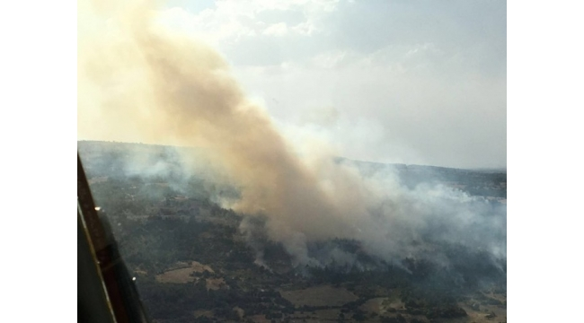 Denizli'de yaklaşık 10 hektar ormanlık alan kül oldu