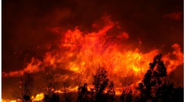 İzmir'de büyük orman yangını