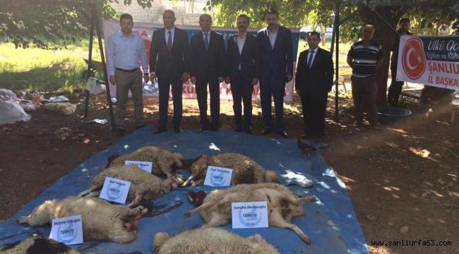Şanlıurfa Ülkü Ocakları 150 Kurban dağıttı
