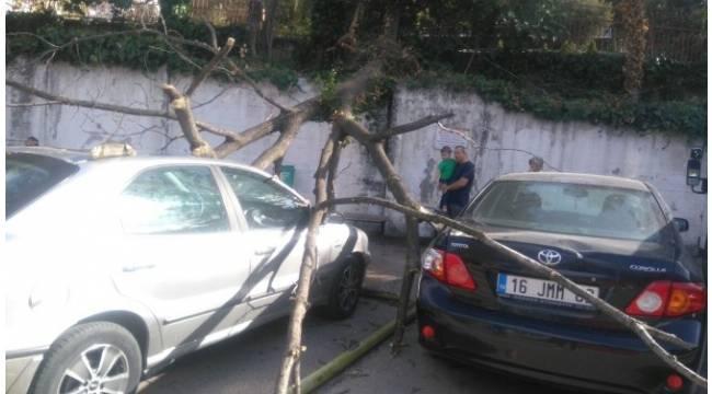 Lodostan devrilen ağaç park halindeki 5 aracın üzerine düştü