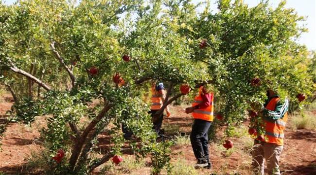 Şanlıurfa'da fakir ailelere meyve