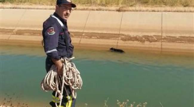 Şanlıurfa'da kanala düşen köpek kurtarıldı