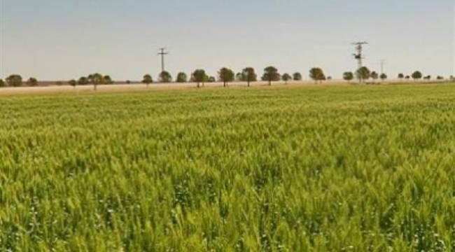 Şanlıurfada ekilmeyen tarlaları devlet ekecek!