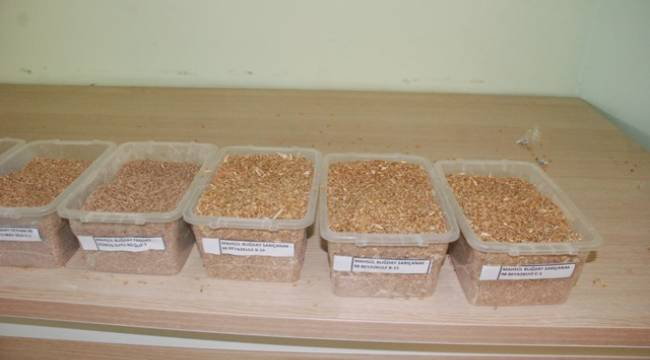 Urfa'da Makarnalık Buğday alıcı bulmadı