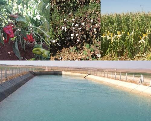 Urfa'da sulama sezonu sona erdi