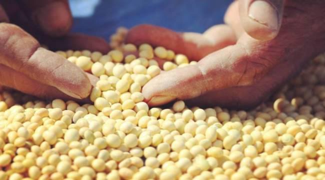 Urfa'ya uygun yeni alternatif tarım ürünü geliştirildi