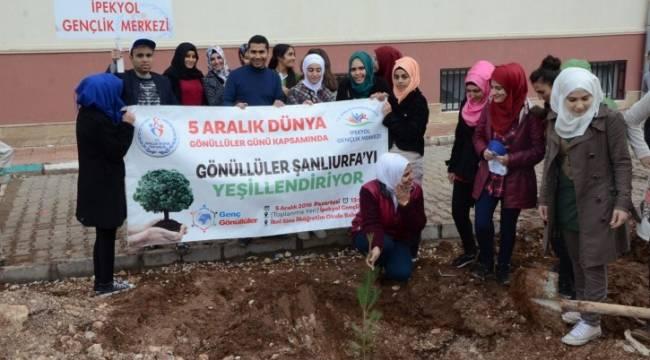 Gençler okul bahçesine ağaç dikti