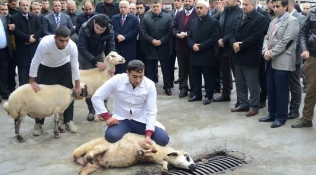 Urfa'da şehit polisler için kurban kesildi