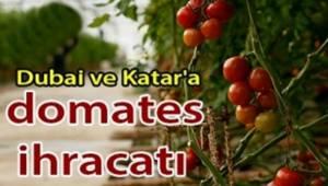 200 milyon dolarlık domates ihracatı Yapılacak