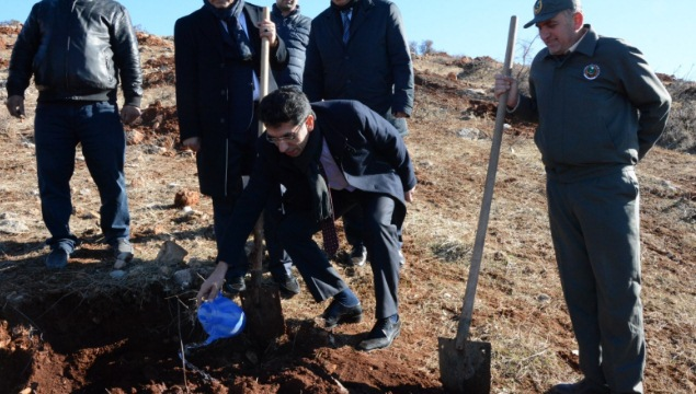 700 dekar alanda 30 bin adet fıstık fidanı toprakla buluştu