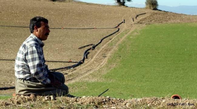 Buğday kuraklık verim sigortası kapsamına alındı