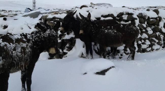 Kar Yağışı ve Buzlanma Eşekleri Vurdu-Videolu Haber