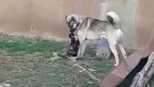 Kedi ve köpeğin dostluğu