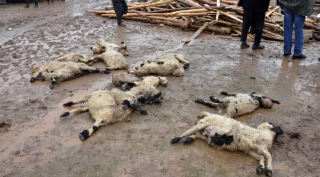 Şanlıurfa'da 40 koyun telef oldu