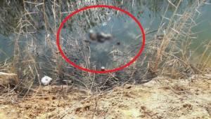 Urfa'da 3 gün arayla ikinci ceset