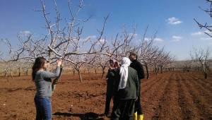 Fıstık ve üzüm bağı çiftçisine uygulamalı bilgi veriliyor