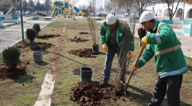 Haliliye'de Parklar güneşli günlere hazırlanıyor-Videolu Haber