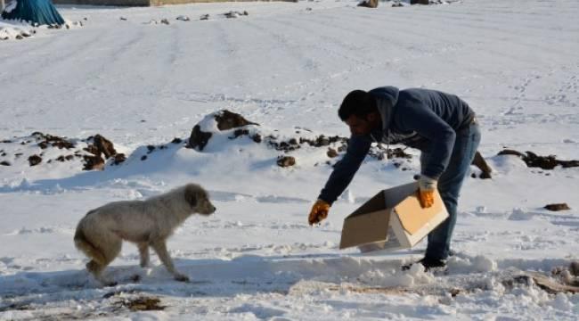 Hayvanlar için doğaya yem bırakıldı