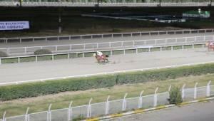 Safkan Arap atlarının şampiyonu Taşçı Pehlivan oldu