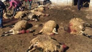 Şanlıurfa'da 90 koyun telef oldu