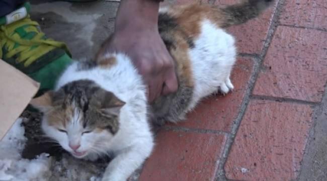 Sokak ortasında kediye eziyet etti