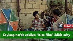 Ceylanpınar'da çekilen kısa film ödüle aday-Videolu Haber