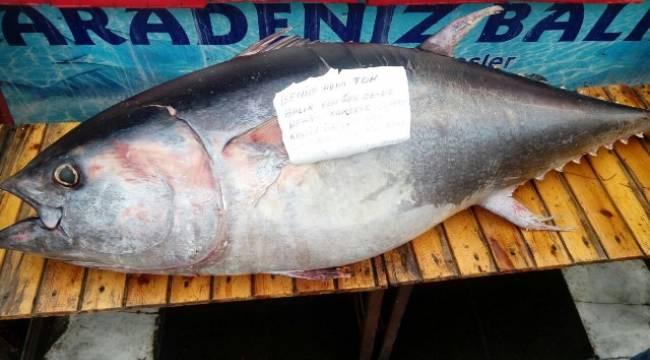 Kebap Diyarı Urfa'da 2 Metrelik Balık ilgi odağı oldu