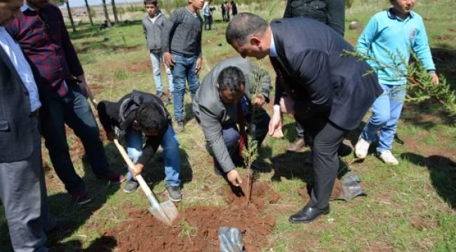 Öğrenciler çöp toplayıp ağaç dikti