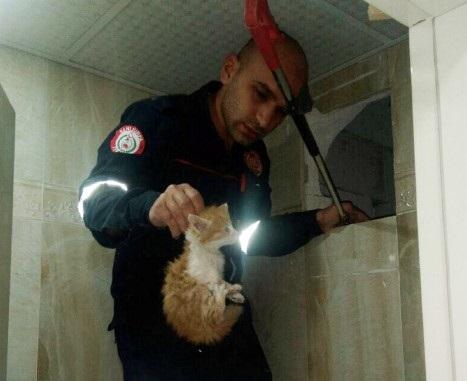 Havalandırma boşluğunda sıkışan kediler kurtarıldı