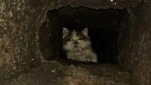 Küçük Kedi duvar kırılarak Kurtarıldı