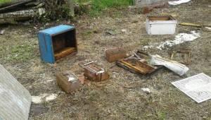 Sakarya'da ayılar arı kovanlarına saldırdı