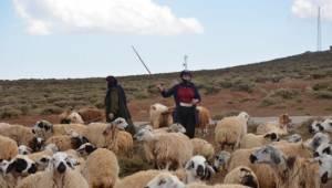 Şanlıurfa'da göçebe yaşayan çoban hiç şehir görmedi