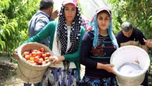 Tarım işçileri: İşimiz çok zor, yevmiyemiz çok az