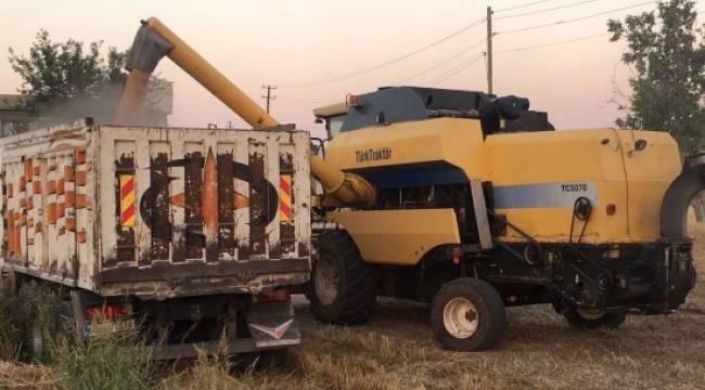 Birecik'te buğday hasadı devam ediyor
