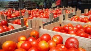 Fakıbaba'dan Rusya'nın domates ithalatı açıklaması