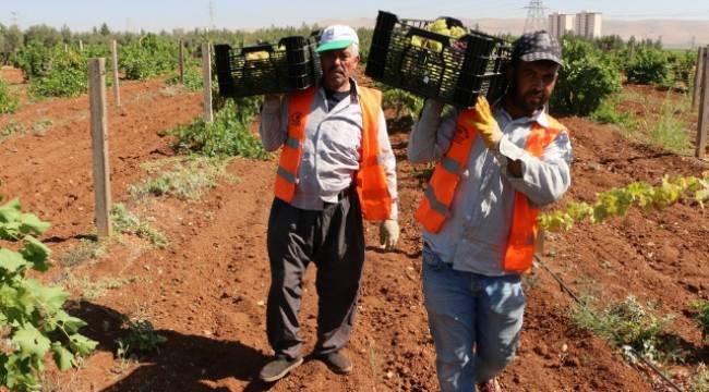 Dar gelirli ailelere taze meyve ikramı-Videolu Haber