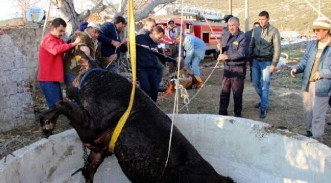 Hayvan kurtarma dersi sadece Harran üniversitesinde veriliyor