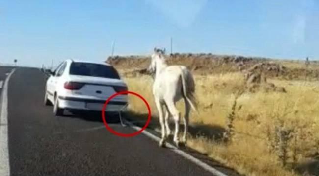 Otomobilin arkasına bağlanan atın görüntüleri yürek sızlattı