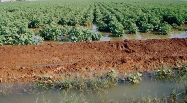 Tarımda vahşi sulama büyük israf