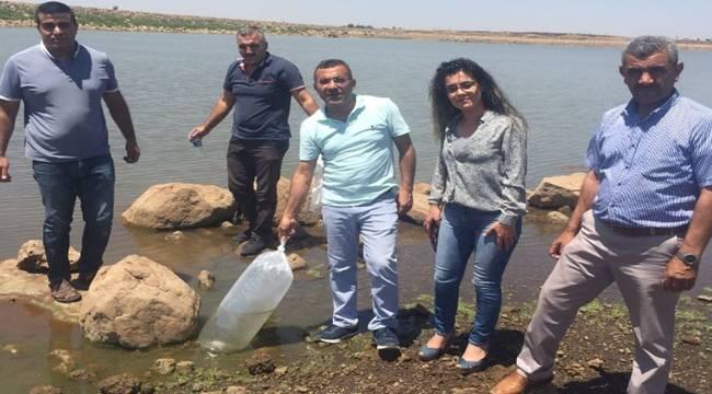 Viranşehir'de gölete 300 bin balık bırakıldı