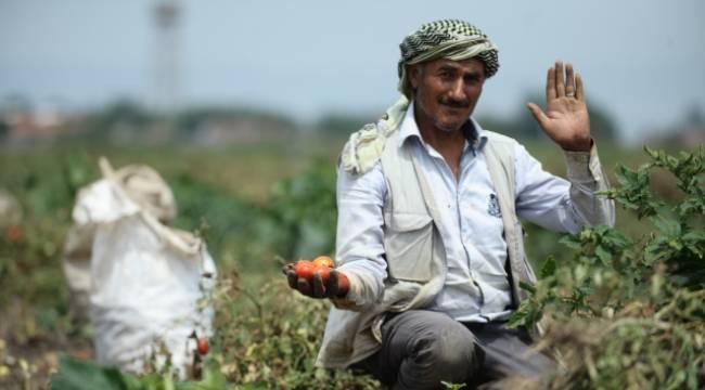 Dolu zor şartlar altında çalışan mevsimlik işçileri de mağdur etti