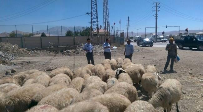 Eyyübiye'de Kurban Satış ve Kesim yerleri belli oldu