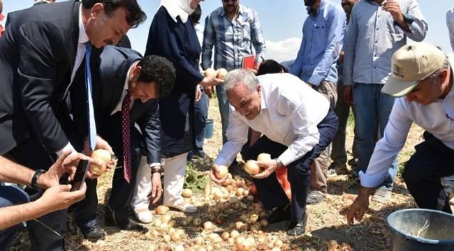 Fakıbaba işçiler ile birlikte soğan topladı