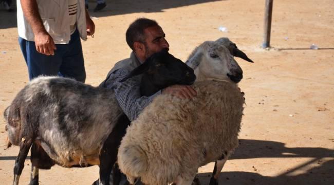 Şanlıurfa'da Kurban Bayramı Heyecanı