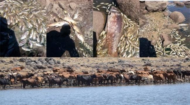 Siverek'te Hayvanlar Ölüyor