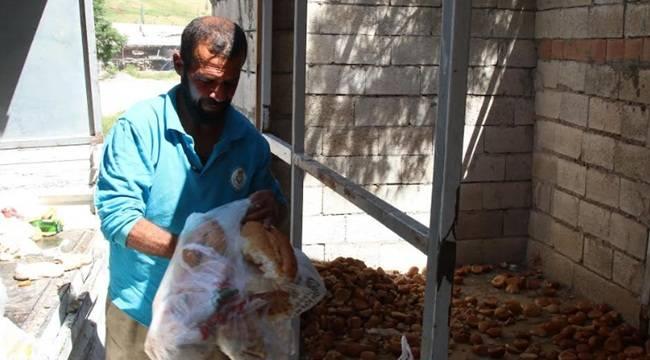 Bayat Ekmekler Doğal Yaşama Kazandırılıyor-Videolu Haber